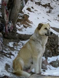Dog in Boom Gorge, 2008