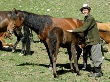 Tending the horses, Jailoo near Kul-Tor, 2008