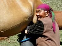 Milking a horse, Jailoo near Kul-Tor, 2008