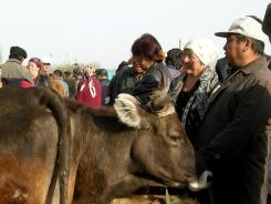 Karakol Livestock Market, 2008