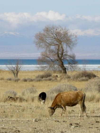 Kara Talaa, southern shore of Issyk Kul, 2008