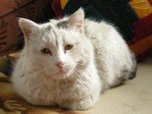 Tash Rabat caretaker's cat, 2008